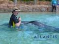Dolphins 1f5f14c863c44445ab7d125914179f21