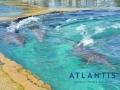 Dolphins 1ff728eaa4f34f8786f00bb8f67b12f1